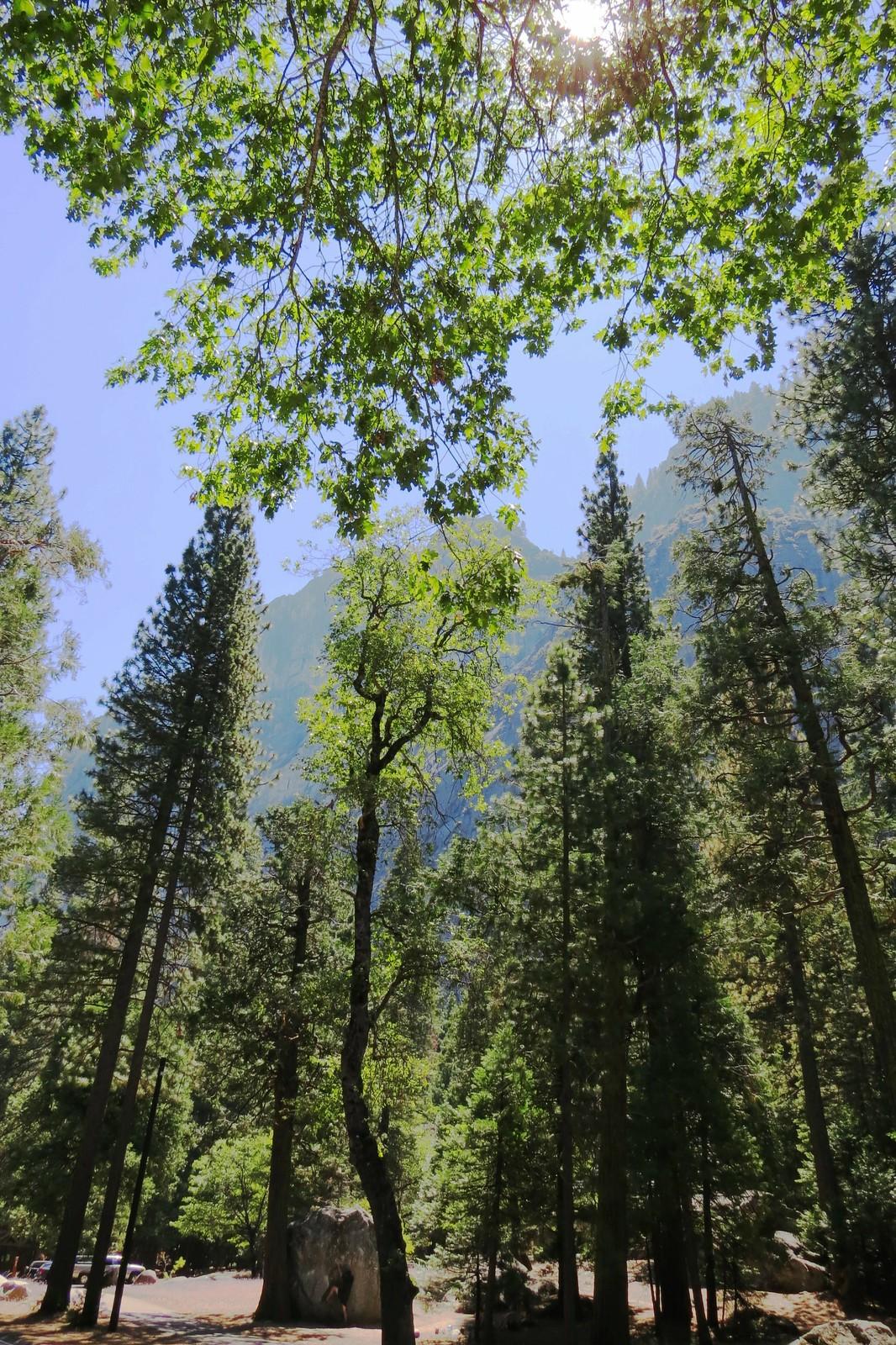 Spirits of Yosemite