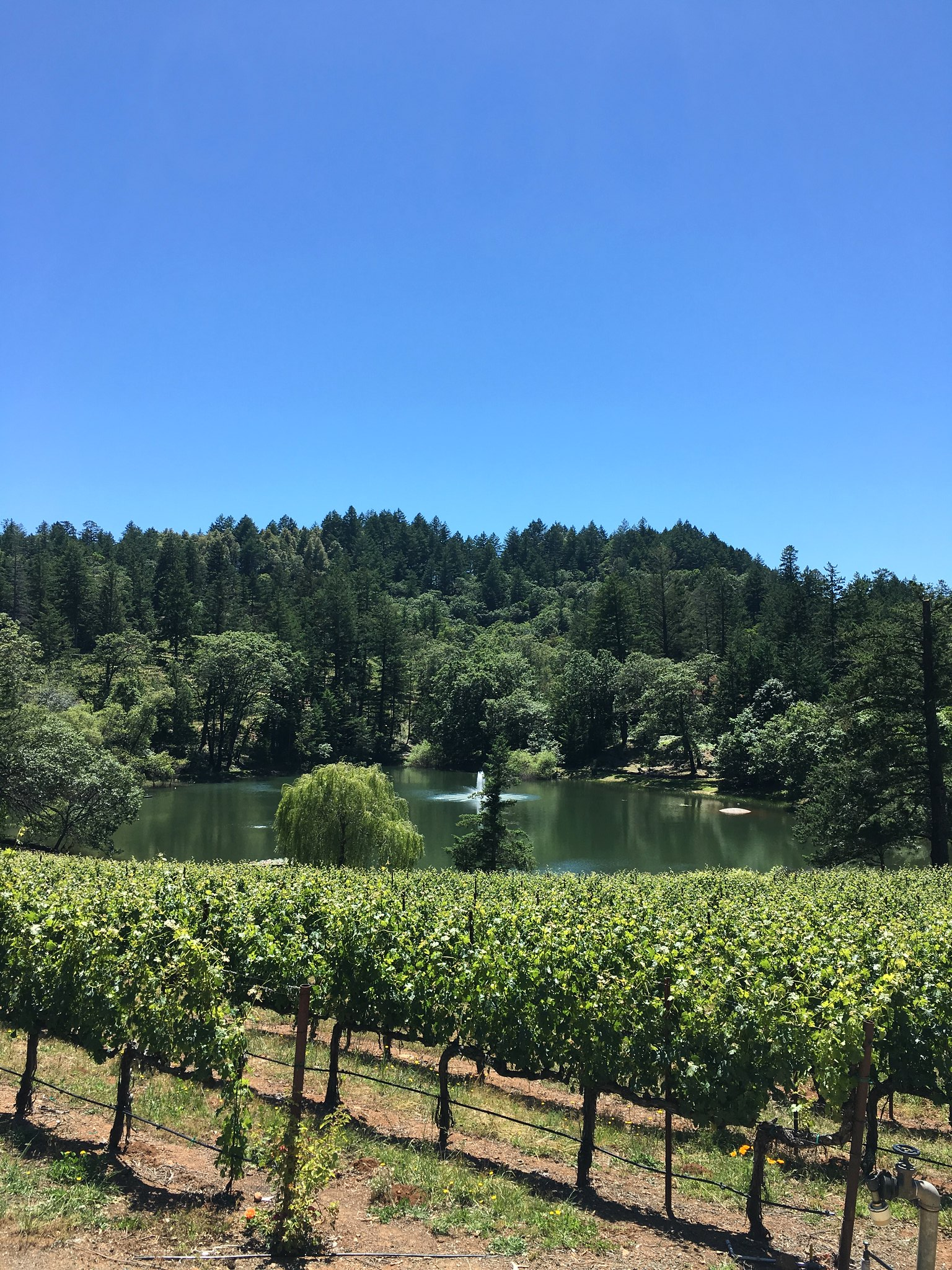 simplyxclassic, miriam gin, where to stay in napa, what to do in napa california, travel blogger, mommy, lifestyle, fashion blogger, orange county, sonoma, napa valley, solage calistoga