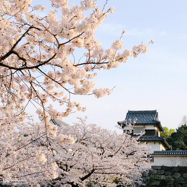 北九州之春 | 16