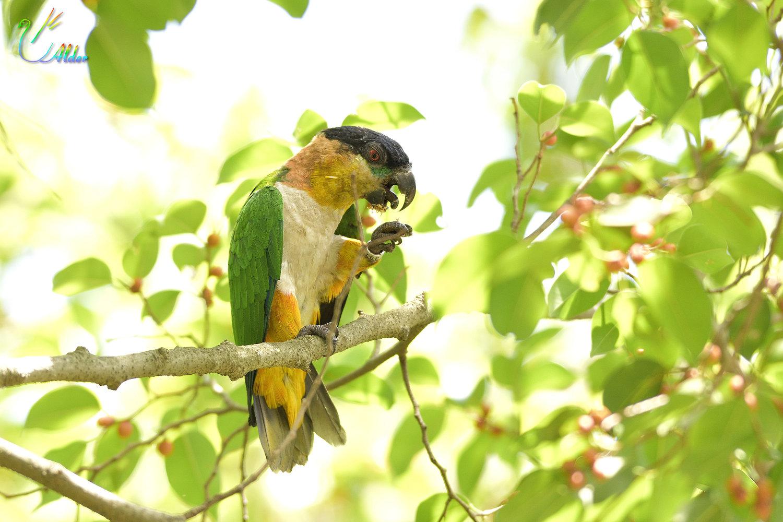 Parrot_2273