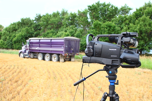 Purple on cam.