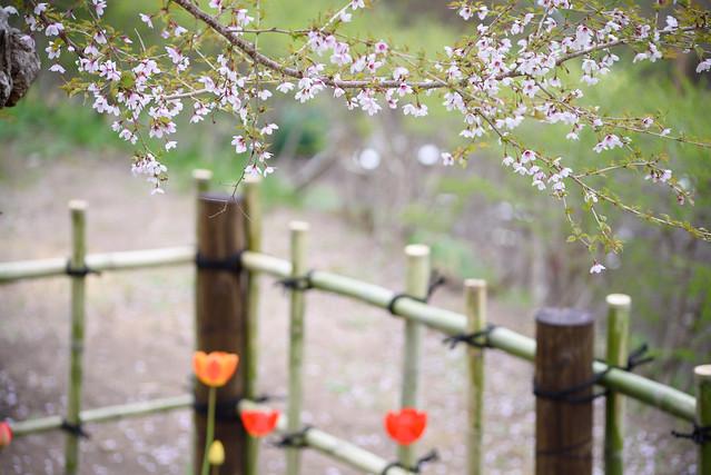 spring flower 8