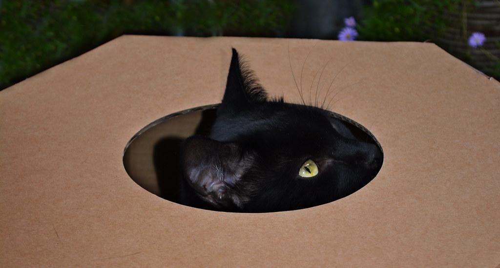 Black cat in a box!
