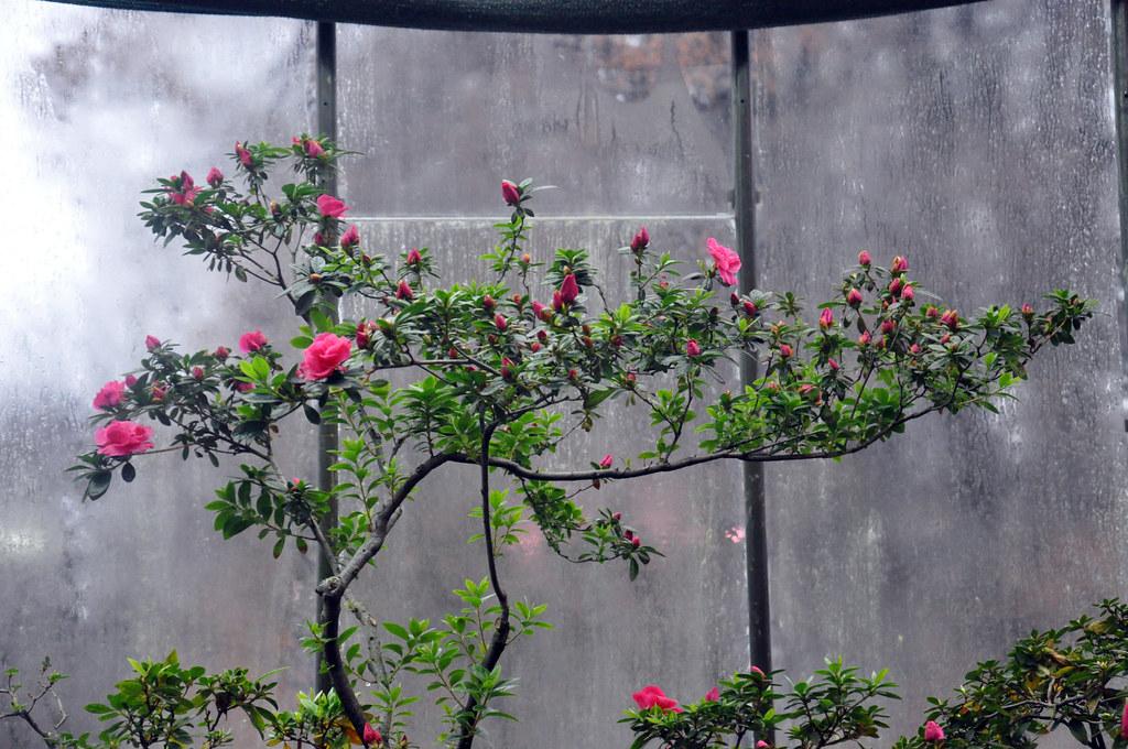 Ботанический сад DSC_0247
