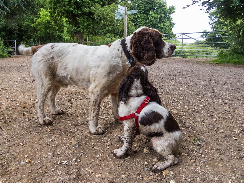 Millie (14 weeks) looks up to Max (7 years)