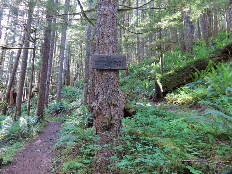 Siouxon Trail junction with the Horseshoe Ridge Trail