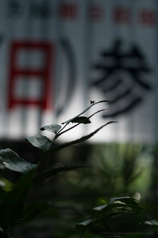 Hibiya Park 日比谷公園
