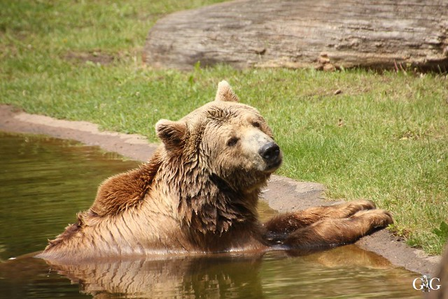 Sonntags-Besuch Zoo Berlin 19.06.201681