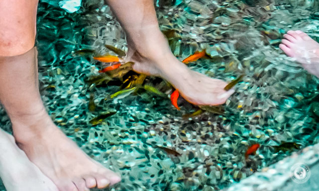 Dragon-Valley-Hotel-Hot-Springs-Taichung-County-Fish-Cleaning-Feet-1024x614.jpg