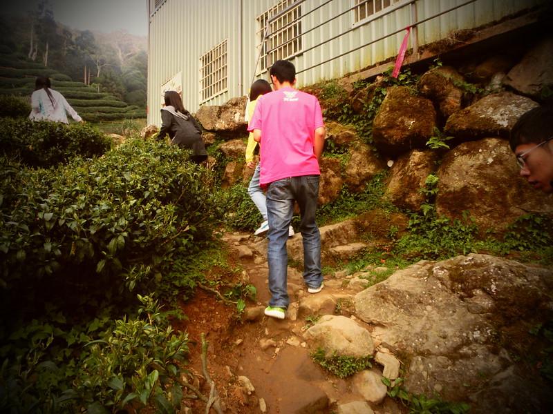 Taiwan Island trips。Couchsurfing。環島景點。南投秘境。忘憂森林。17度C隨拍。  (21)