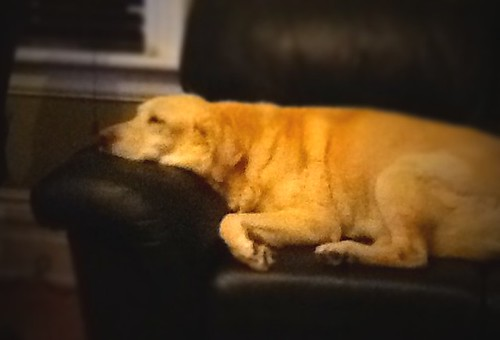 Old Dog Sleeping With Eyes Open