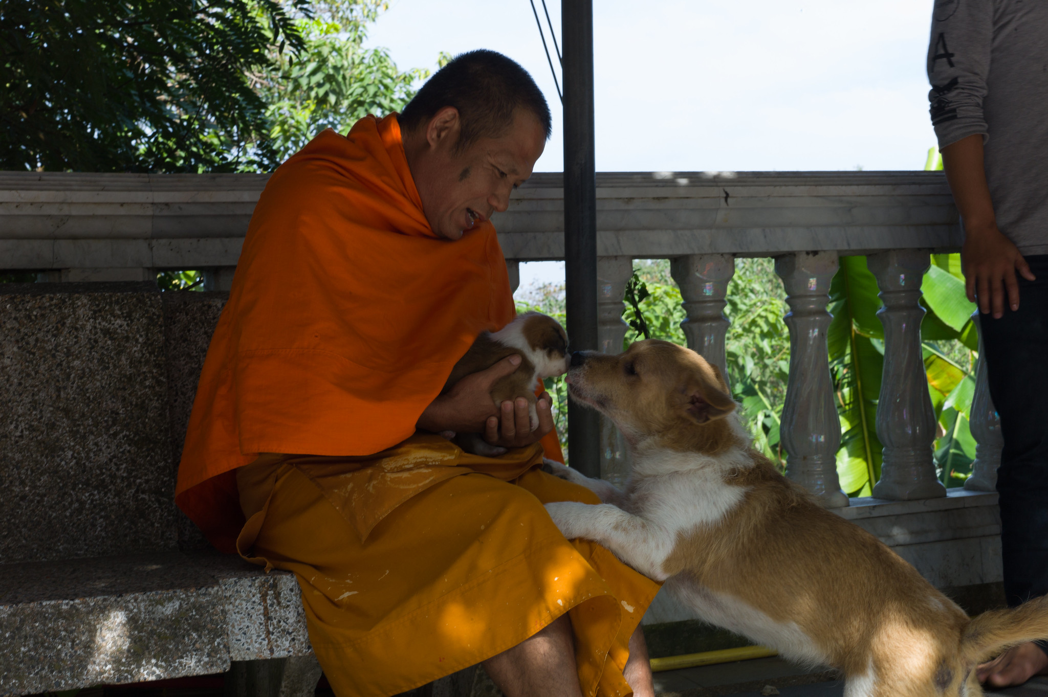 Monk and Dogs