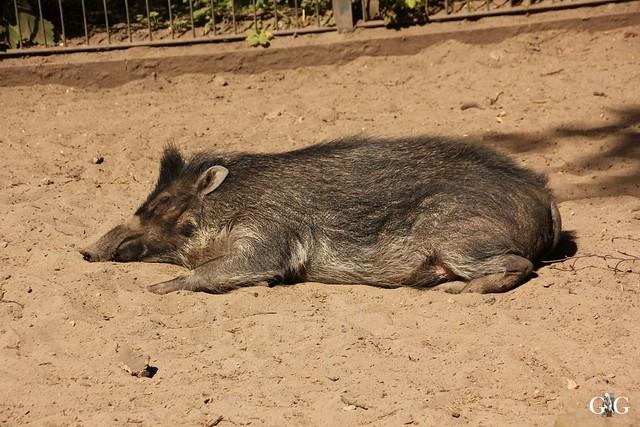 Besuch Zoo Berlin 22.05.1644