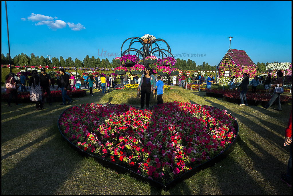 Colorful Floral Paradise In Dubai Miracle Garden