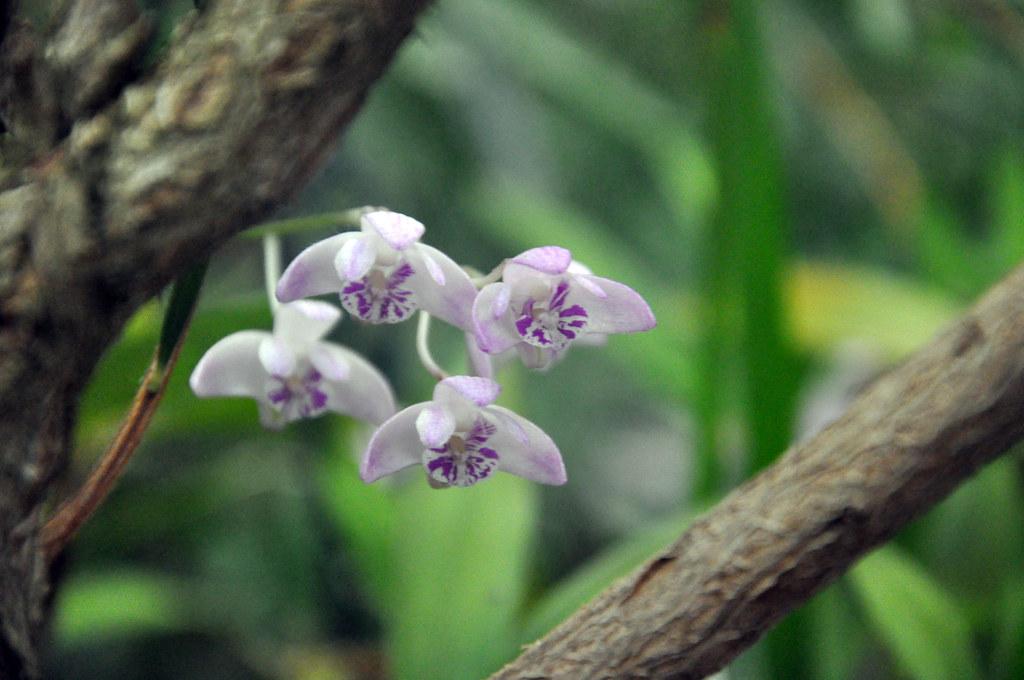 Ботанический сад DSC_0179