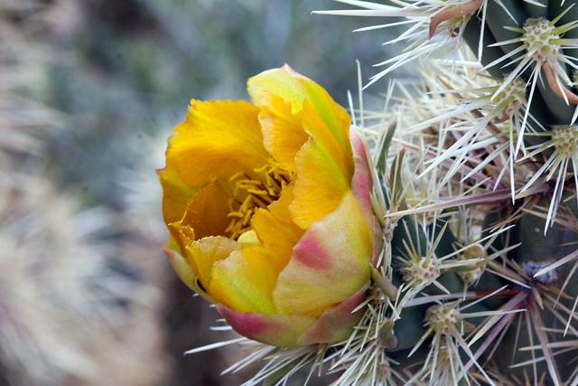 Mojave2016-9247