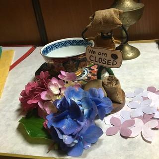 紫陽花とMr.ホリディ