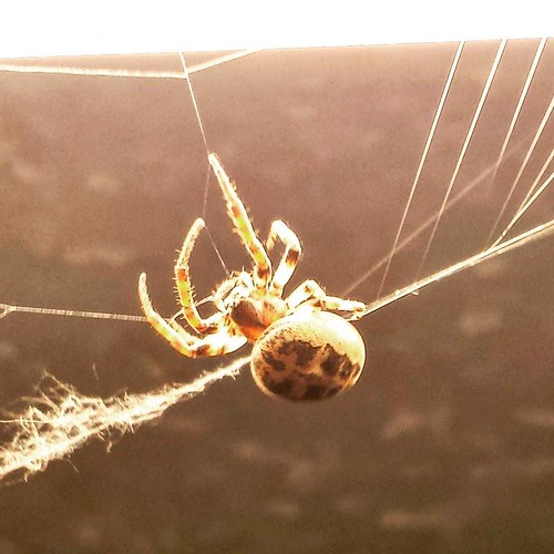 Phil (or Philippa) hard at work. #spiders