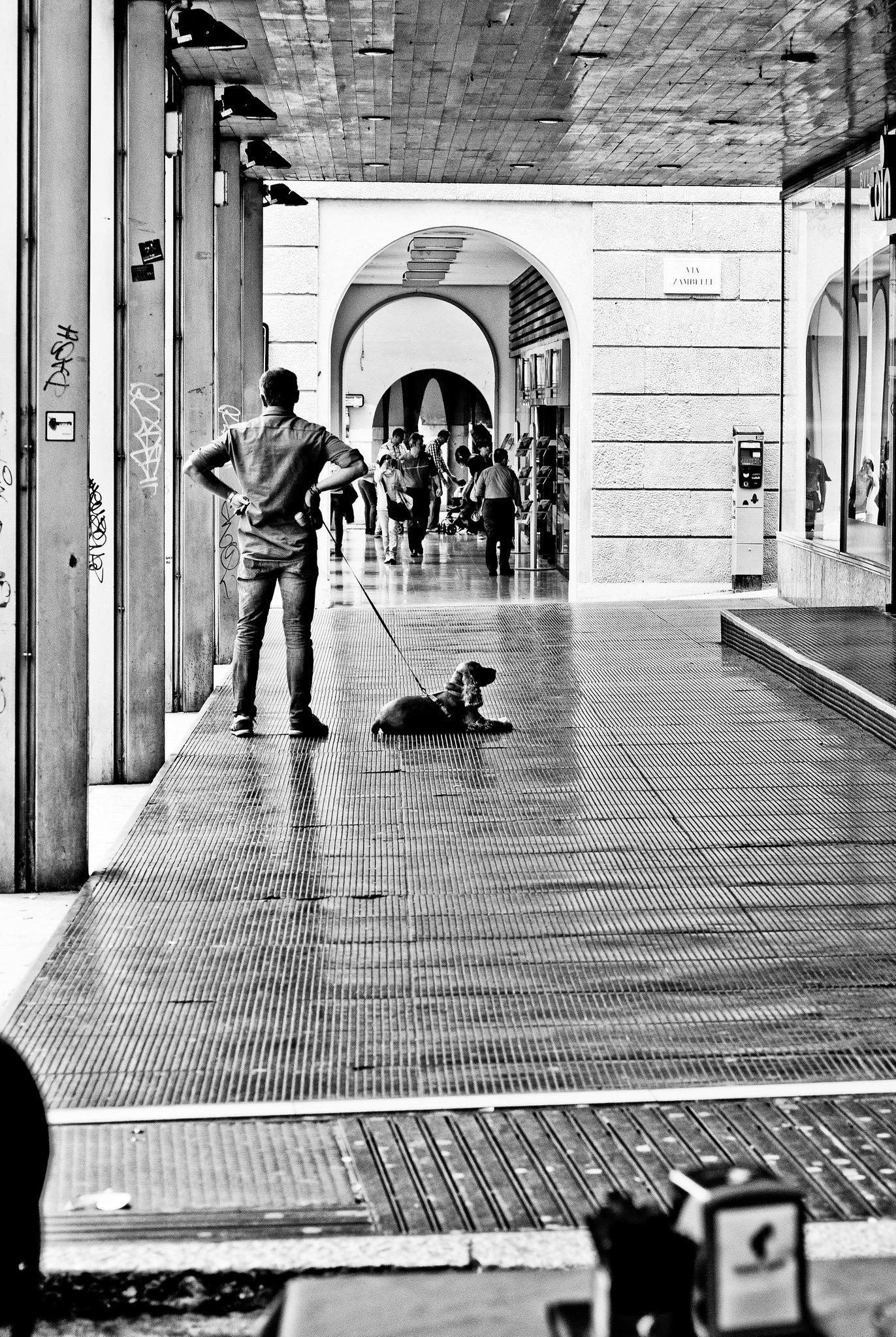 dog with man // verona