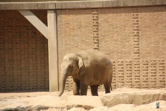 Besuch Zoo Berlin 22.05.1647