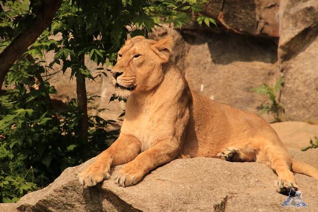 Tierpark Berlin 28.05.2016  0262