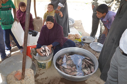 Women fish retailers in Shakshouk, Fayoum, Egypt. Photo by Jens Peter Tang Dalsgaard, 2013.