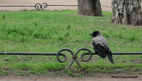 Itävaris Taurian puistossa