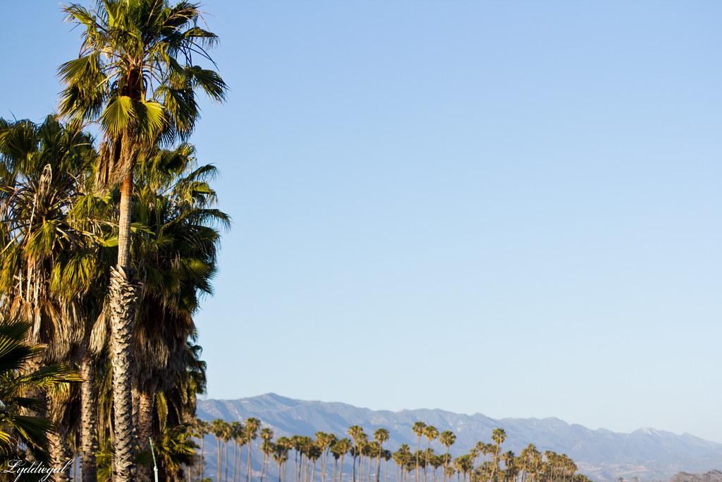santa barbara palms.jpg