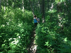 Overgrown Freeman Trail