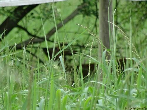 Balade nature : Rencontres dans la prairie de Luisant