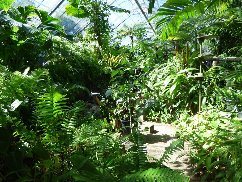 Cairns 2016 day 6 Kuranda
