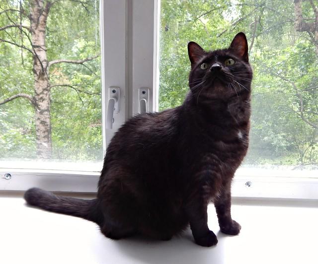 кот Муся на окне