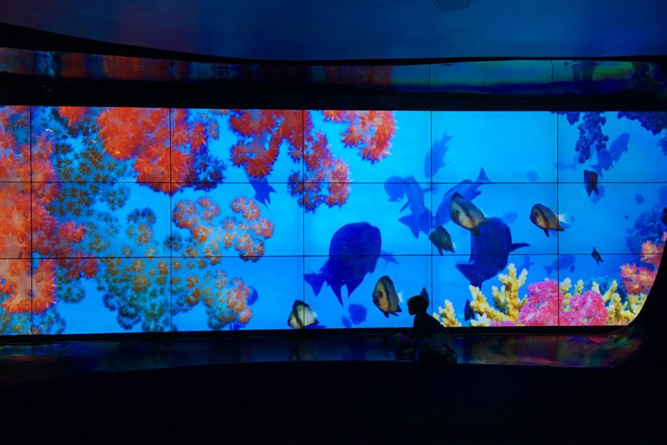 101615_aquarium07
