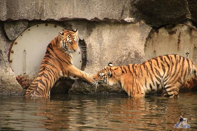 Tierpark Berlin 18.06.2016  0143