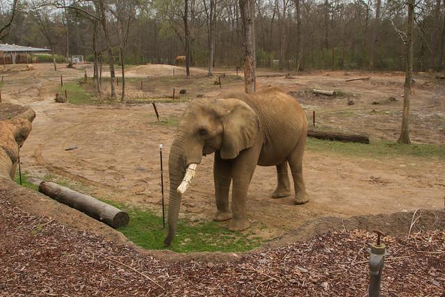 27482846740 737897770e z Birmingham Zoo