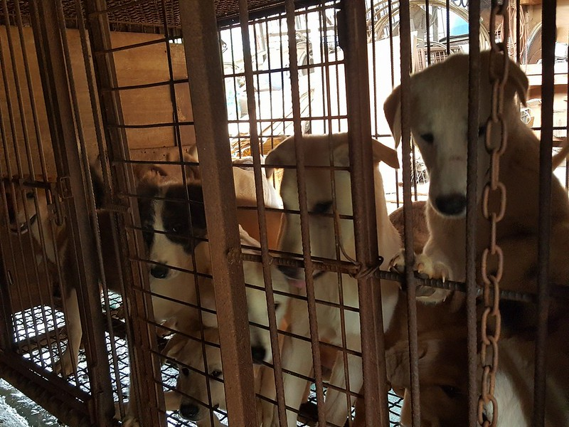 Major Victory! Another dog farm shutting down and 300 puppies to be saved by the Nami Kim Team.