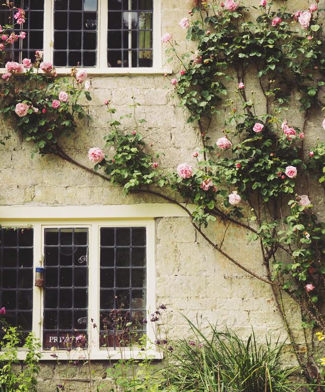 Pink roses at Stourhead