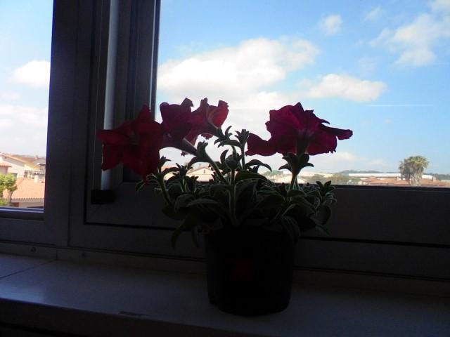 Les plantes 1r