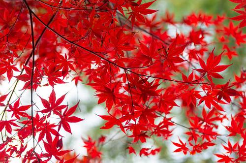 紅葉狩り - 東山公園 25