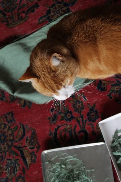 Kipling with willow scraps - Misericordia