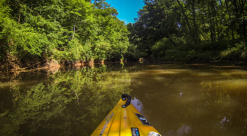 Goat Island in the Broad River-133