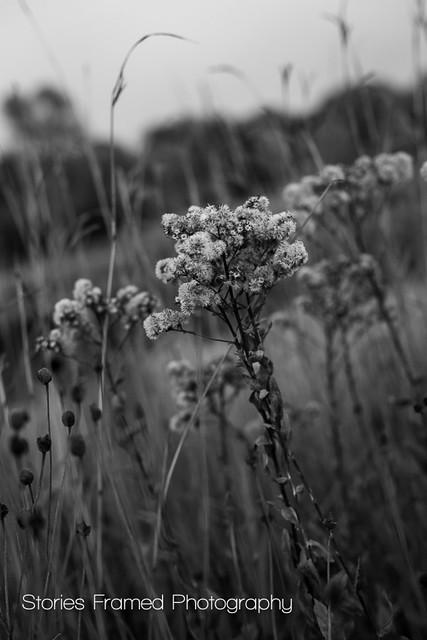 292. | fall flowers.
