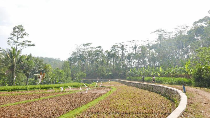 28097557996 45793b45aa c - REVIEW - Mesastila Resort, Central Java (Arum Villa)