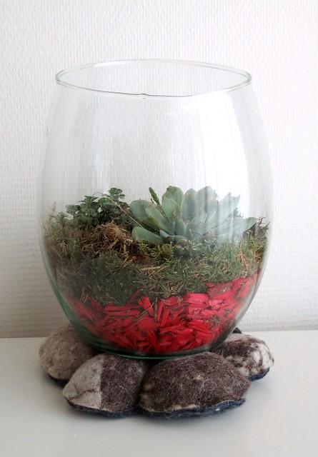 Sukhi onderzetter terrarium