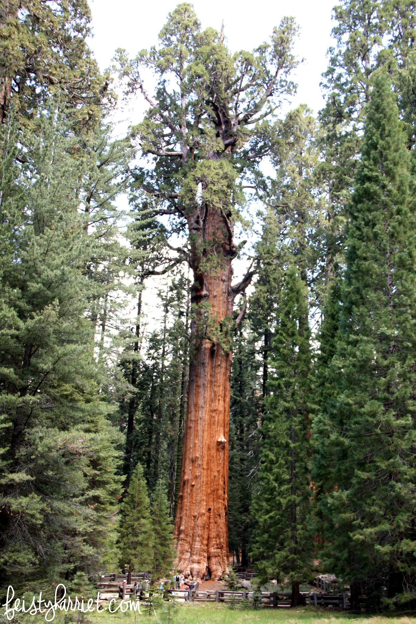 Sequoia National Park_feistyharriet_May 2016 (9)