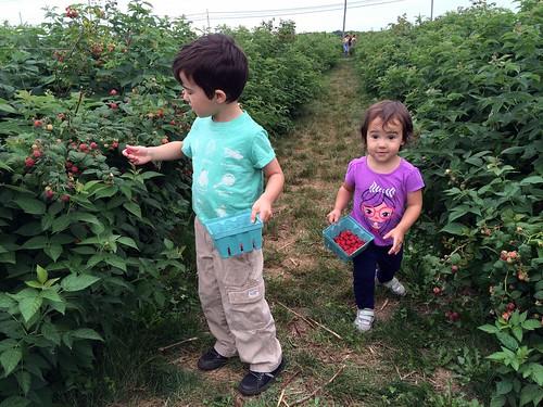 Raspberry Picking 2016