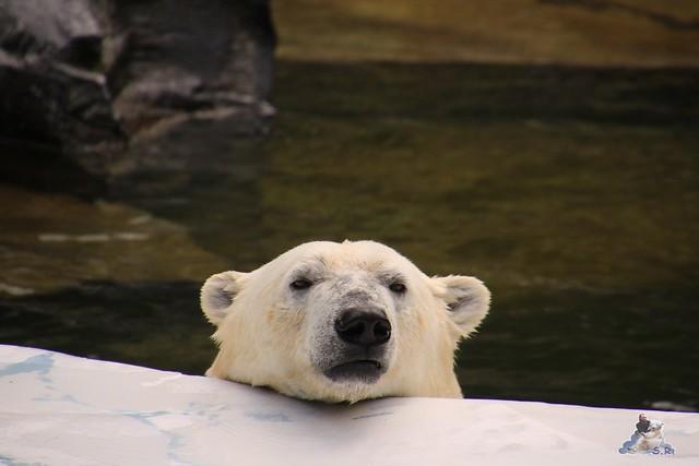 Tierpark Berlin 18.06.2016  0181