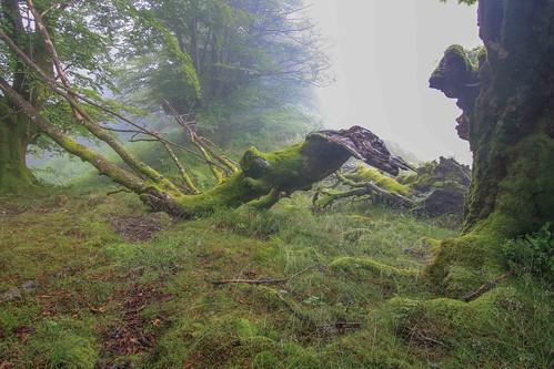 Parque Natural de #Gorbeia #Orozko #DePaseoConLarri #Flickr - -605