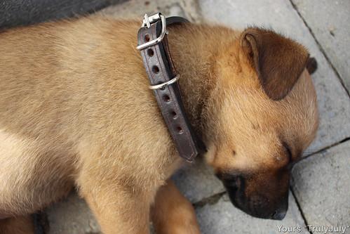 Lola's new collar.