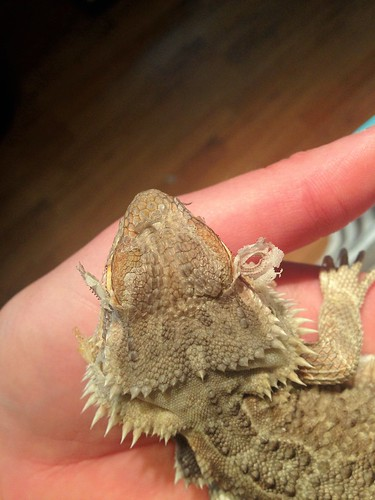 Critter is shedding his eye rings